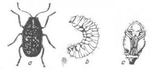 owady-magazynowe