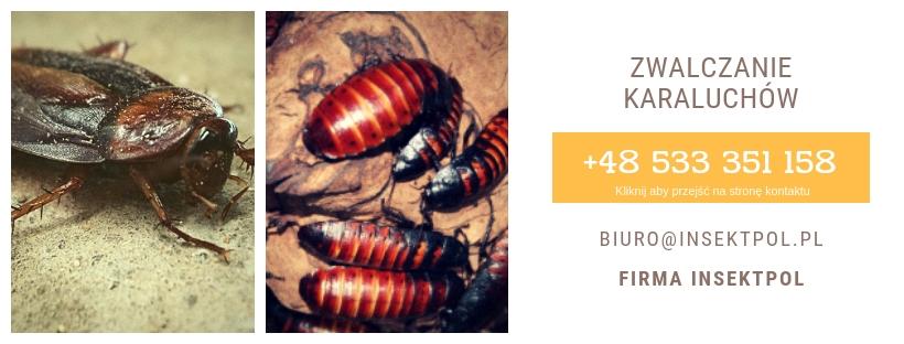 Zwalczanie karaluchów, karaczanów, firma